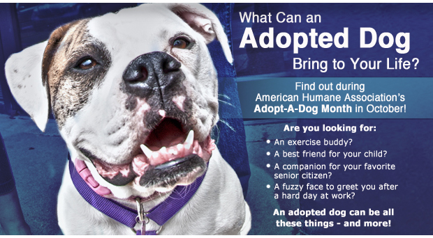 What can adopted dog bring to your life - Adopt a Dog Month - SRVC