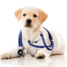 An image of a dog wearing a white coat and stethoscope - SRVC