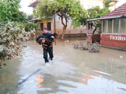 man saves his dog from a flood, flood and disaster in town Obrenovac in Serbia, damaged houses and property, state or condition after terrible flood, destroyed and abandoned city