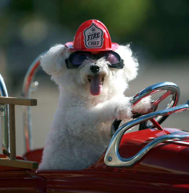 An image of a cute dog driving a toy car - SRVC