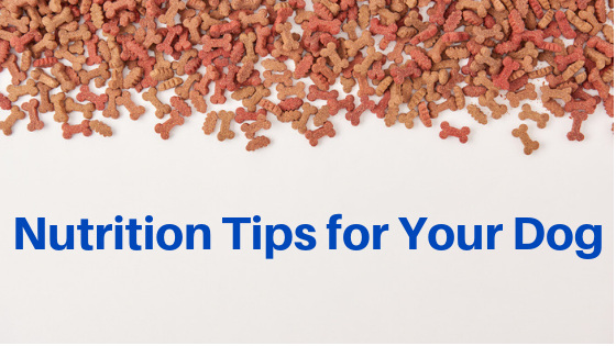 Nutrition Tips for your Dog - SRVC