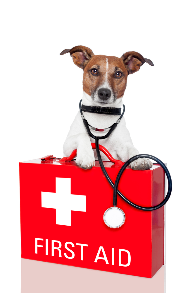 emergency veterinary service care Little Rock